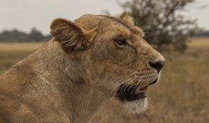Volunteer safaris in Tanzania